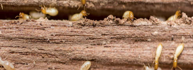 pest control Blue Mountains – Pest Control Service Blue Mountains